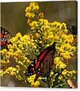 Monarchs On Yellow Canvas Print