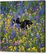 Monet's Cat Canvas Print