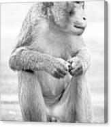 Monkey Dick Canvas Print
