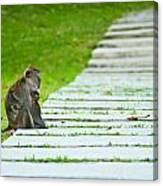 Monkey Mother With Baby Resting On A Walkway Canvas Print