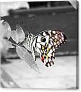 Monochromatic Butterfly Canvas Print