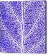 Monotone Close Up Of Leaf Canvas Print