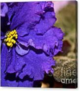 Monster Violet Canvas Print