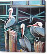 Monterey Pelicans Canvas Print