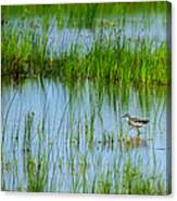 Montezuma National Wildlife Refuge Canvas Print