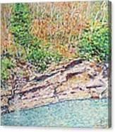 Montlake In Winter Canvas Print