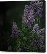 Mood Lilac Canvas Print