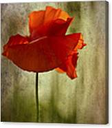 Moody Poppy. Canvas Print