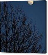 Moon And Trees Canvas Print