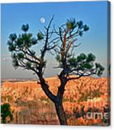 Moon Over Bryce Canyon Canvas Print
