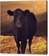Moooo Cow  Canvas Print