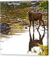 Moose Baby 2 Canvas Print