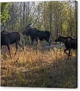 Moose Family Canvas Print