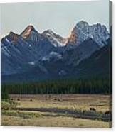 Moose Grazing At Sunset With Mountains Canvas Print