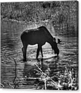 Moose Silhouette Canvas Print