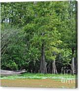 Morales Swamp Pic.#008 Canvas Print