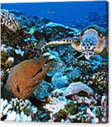 Moray Eel On A Reef Canvas Print