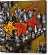 More Autumn Leaves Canvas Print