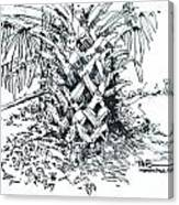 Morikami Gardens' Tree Boca Raton Florida  Canvas Print