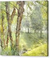 Morning Birches Canvas Print