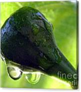 Morning Dew Figs Canvas Print