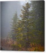 Morning Fall Colors Canvas Print