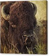 Morning In The Prairie Canvas Print