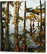 Morning In The Swamps Canvas Print