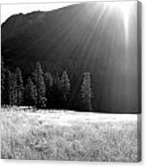 Morning Meadow Canvas Print