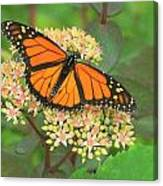 Morning Monarch Canvas Print