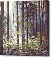 Morning On Black Rock Mountain Canvas Print