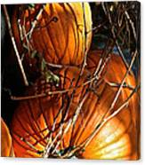 Morning Pumpkins Canvas Print