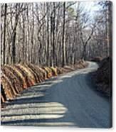 Morning Shadows On The Forest Road Canvas Print