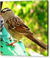 Morning Sparrow II Canvas Print
