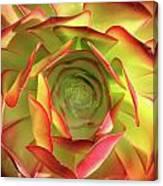 Morning Succulent Canvas Print