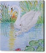 Morning Swim I  Original Colored Pencil Drawing Canvas Print