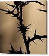 Morning Thorns Canvas Print