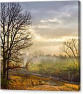 Morning Trees Canvas Print