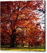 Morton Arboretum In Colorful Fall Canvas Print