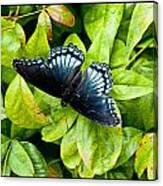 Mosaic Flutterby Canvas Print