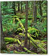 Moss And Fallen Trees In The Rainforest Of The Pacific Northwest Canvas Print