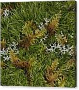 Moss And Lichen Canvas Print