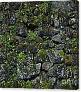 Moss And Stone Canvas Print