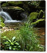 Moss And Water And Ambience Canvas Print