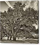 Moss-draped Live Oaks Sepia Toned Canvas Print