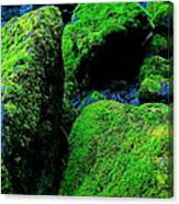Moss In Blue Canvas Print