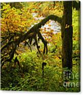 Moss In The Forest Canvas Print