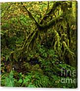 Moss In The Rainforest Canvas Print