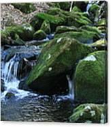 Moss Overflow Canvas Print