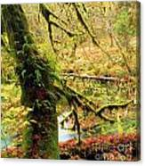 Mossy Bend Canvas Print